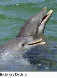 endangered animals: ar...
