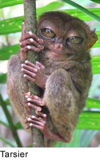 Ape Vs Monkey
