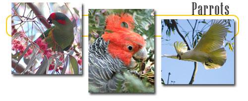 external image animals_subhead_parrots.jpg