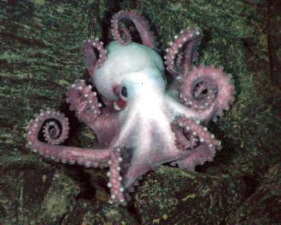 external image mollusk1.jpg